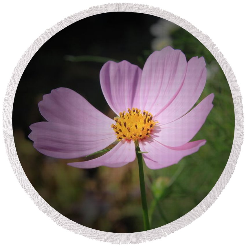Pink Cosmos Floral Round Beach Towel featuring the photograph Single Cosmos by Kathleen Sartoris