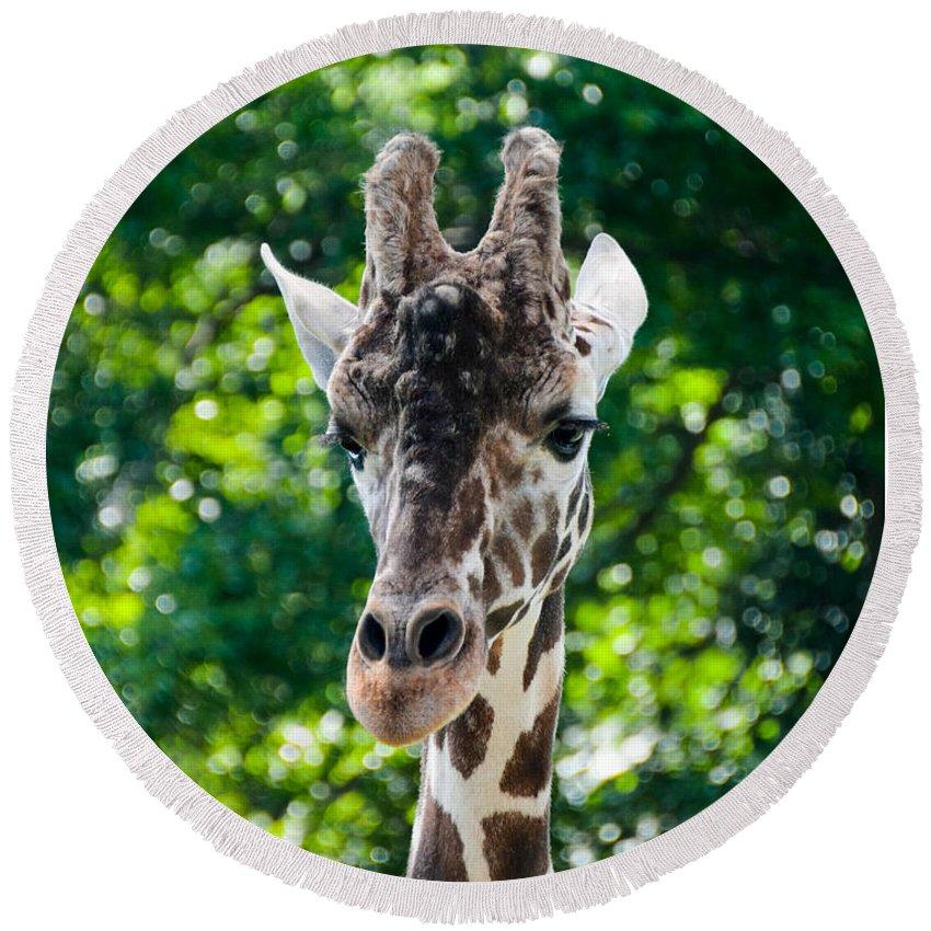 Giraffe Round Beach Towel featuring the photograph Single Giraffe by Jennifer Wick