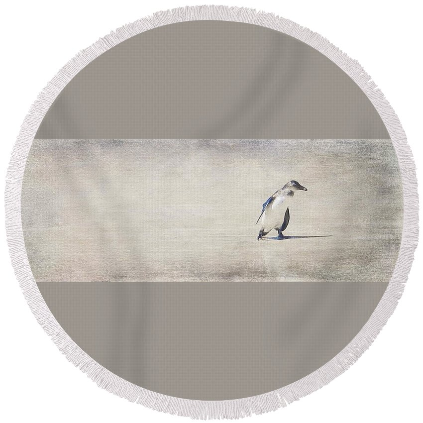Penguin Round Beach Towel featuring the photograph Single Penguin In Deep Thought by Stephanie Graham