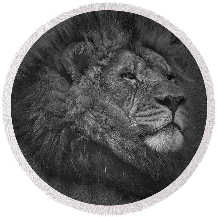 Lion Round Beach Towel featuring the photograph Sir Lion by Ernie Echols
