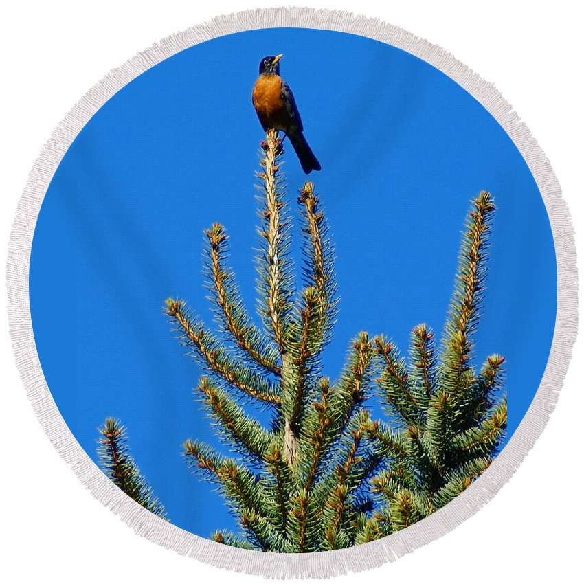 Birds Round Beach Towel featuring the photograph Sitting On Top Of The World by Ben Upham III