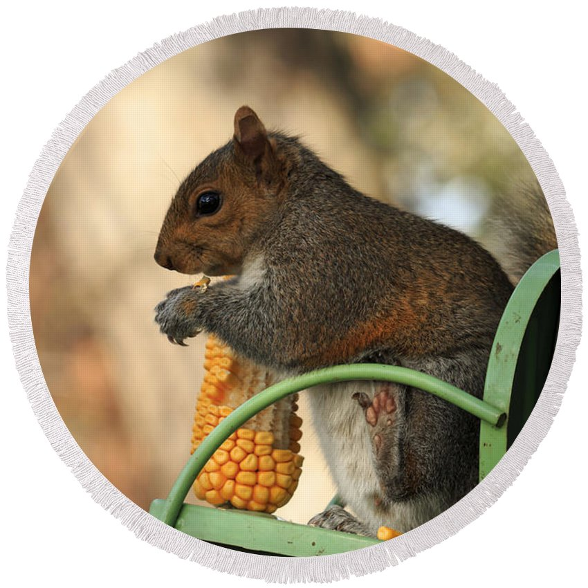Adorable Round Beach Towel featuring the photograph Sitting Squirrel by Travis Rogers