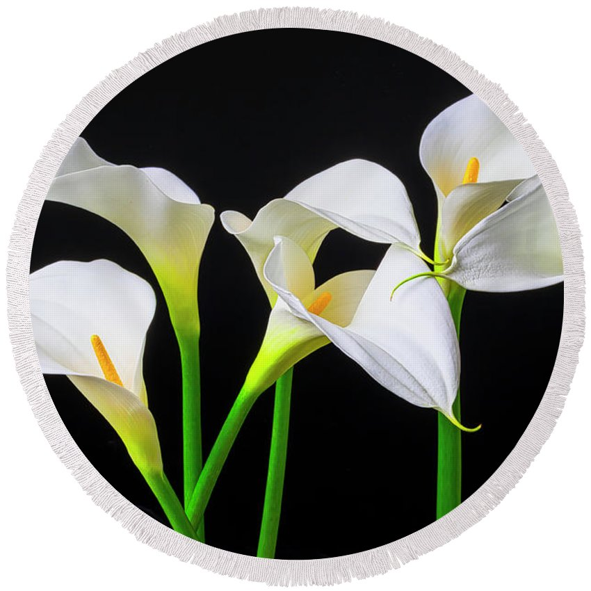 Graphic Round Beach Towel featuring the photograph Six Calla Lilies by Garry Gay