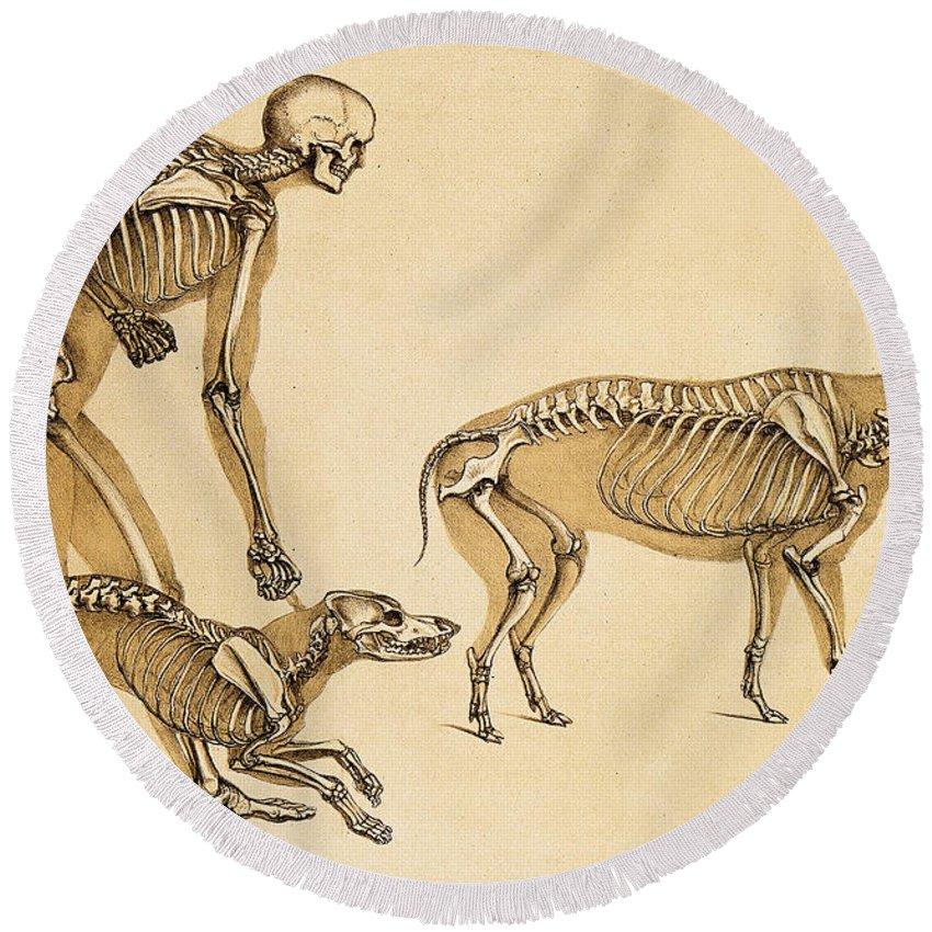 Skeletons Of Man, Dog, Wild Boar, 1860 Round Beach Towel