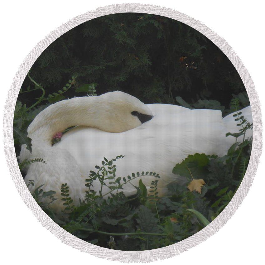 Trumpeter Swan Round Beach Towel featuring the photograph Sleeping Beauty by LKB Art and Photography