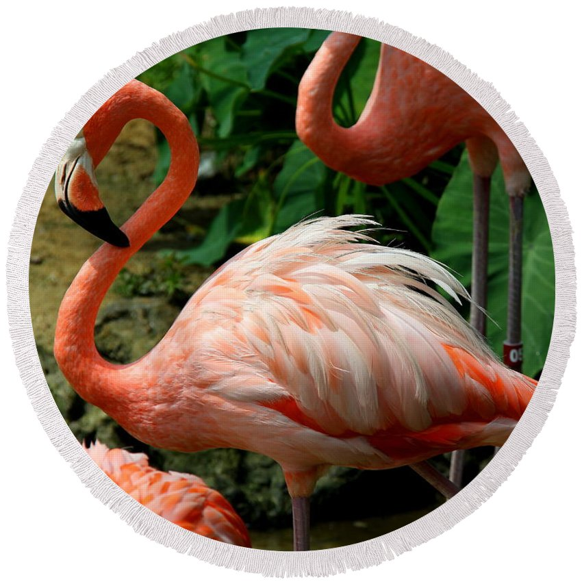 Pink Flamingo Round Beach Towel featuring the photograph Sleeping Flamingo by Barbara Bowen