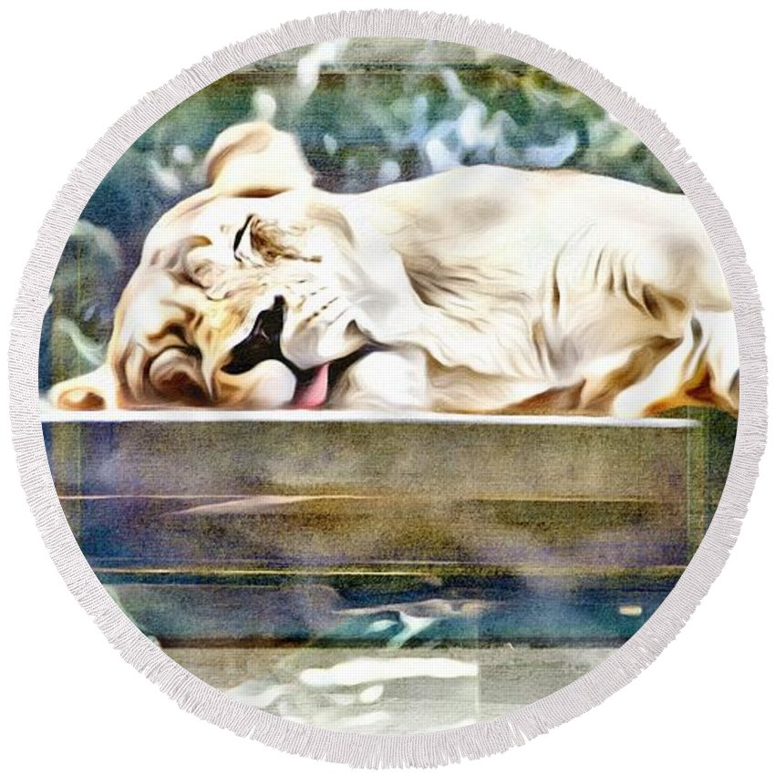 Cat Round Beach Towel featuring the photograph Sleeping Kittykat by Alice Gipson