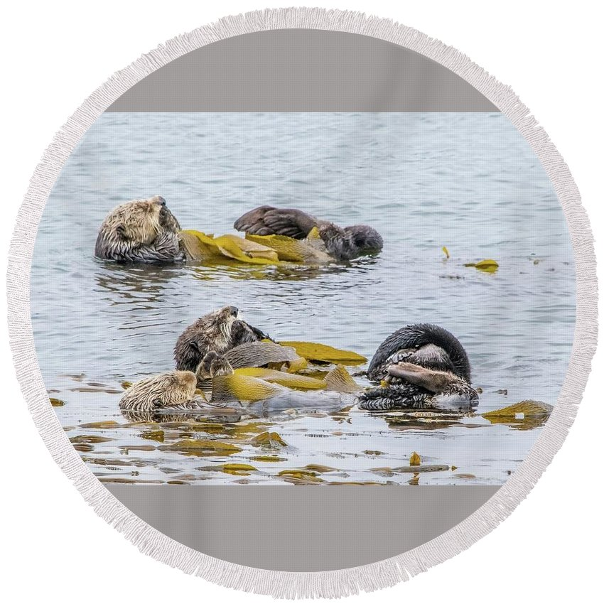 Otter Round Beach Towel featuring the photograph Sleeping Otters by Eric Strickland