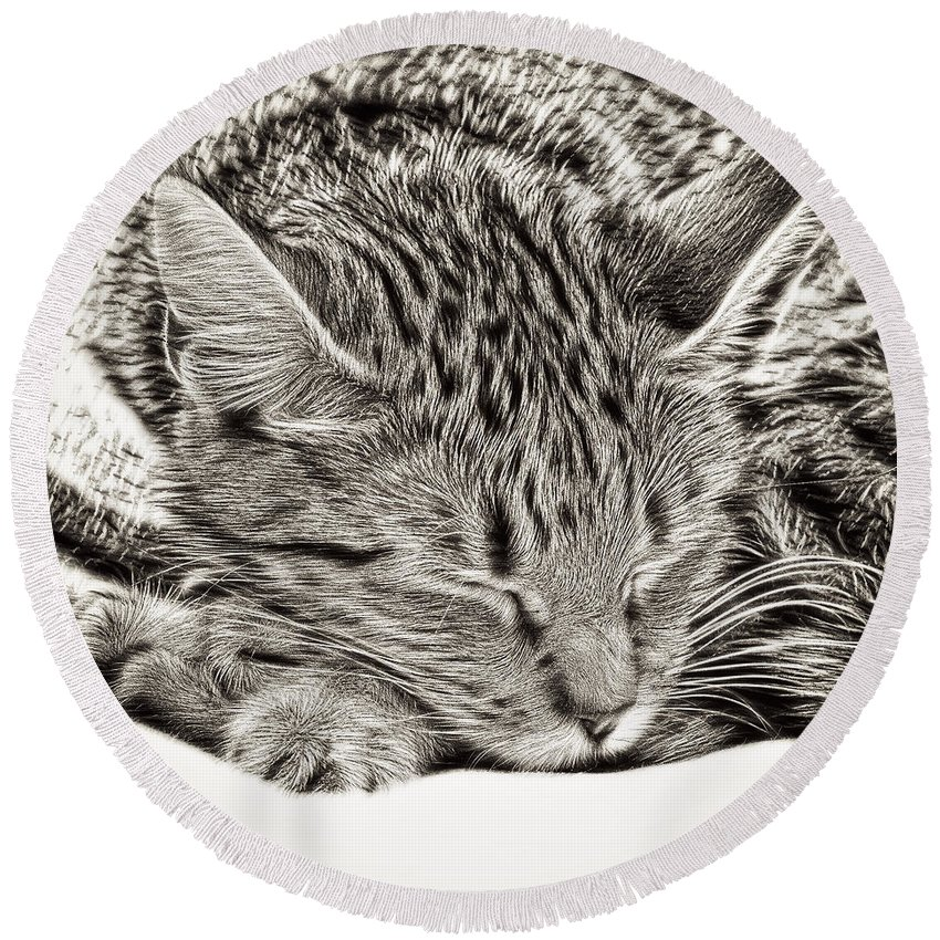 Alive Round Beach Towel featuring the photograph Sleeping Tabby by Tom Gowanlock