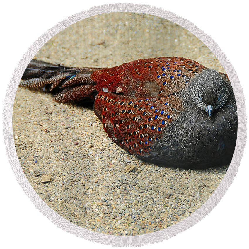 Bird Round Beach Towel featuring the photograph Sleeping Time by Svetlana Sewell
