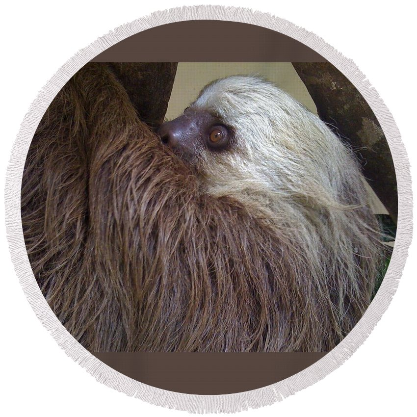 Sloth Round Beach Towel featuring the photograph Sloth by Dolly Sanchez