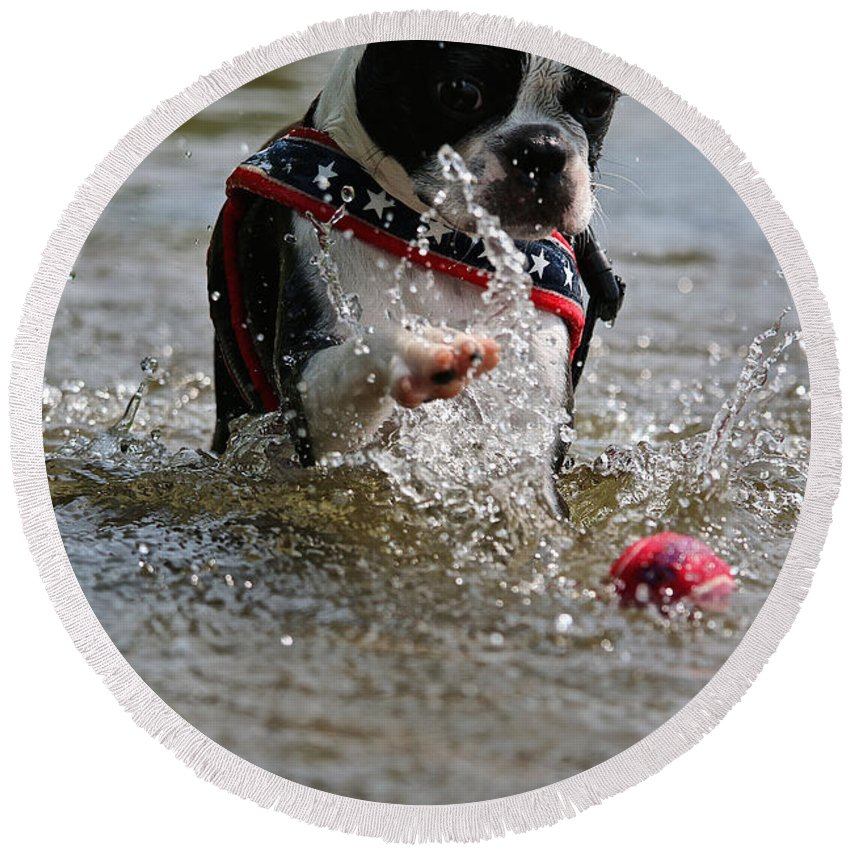 Boston Terrier Round Beach Towel featuring the photograph Smack It by Susan Herber