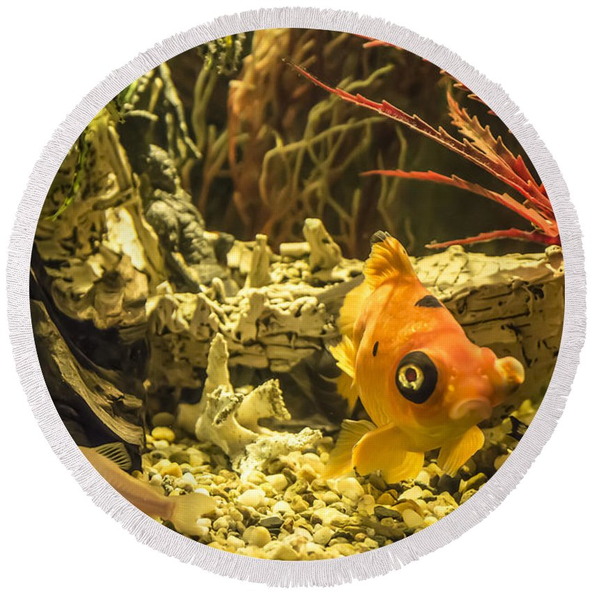 Fish Round Beach Towel featuring the photograph Small Fish In An Aquarium by Adrian Georgescu