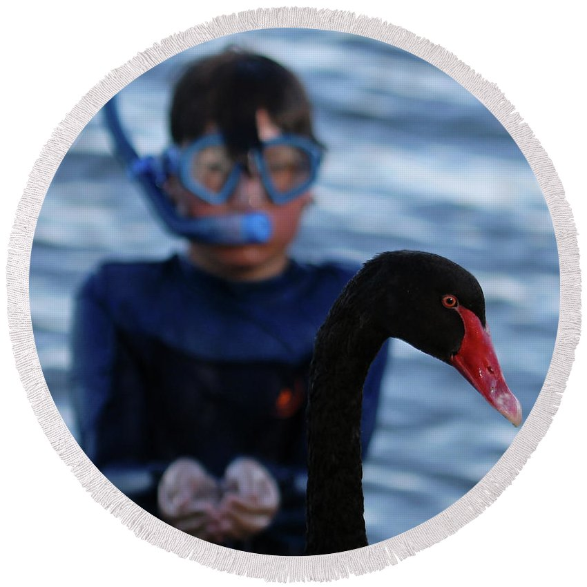 Black Swan Round Beach Towel featuring the photograph Small Human Meets Black Swan by Carolyn Parker