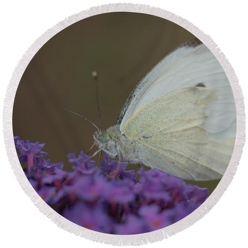 Butterfly Round Beach Towel featuring the photograph Small White by Mickey At Rawshutterbug