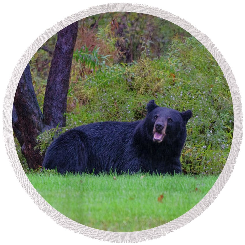 Bear Round Beach Towel featuring the photograph Smiling Bear by ChelleAnne Paradis