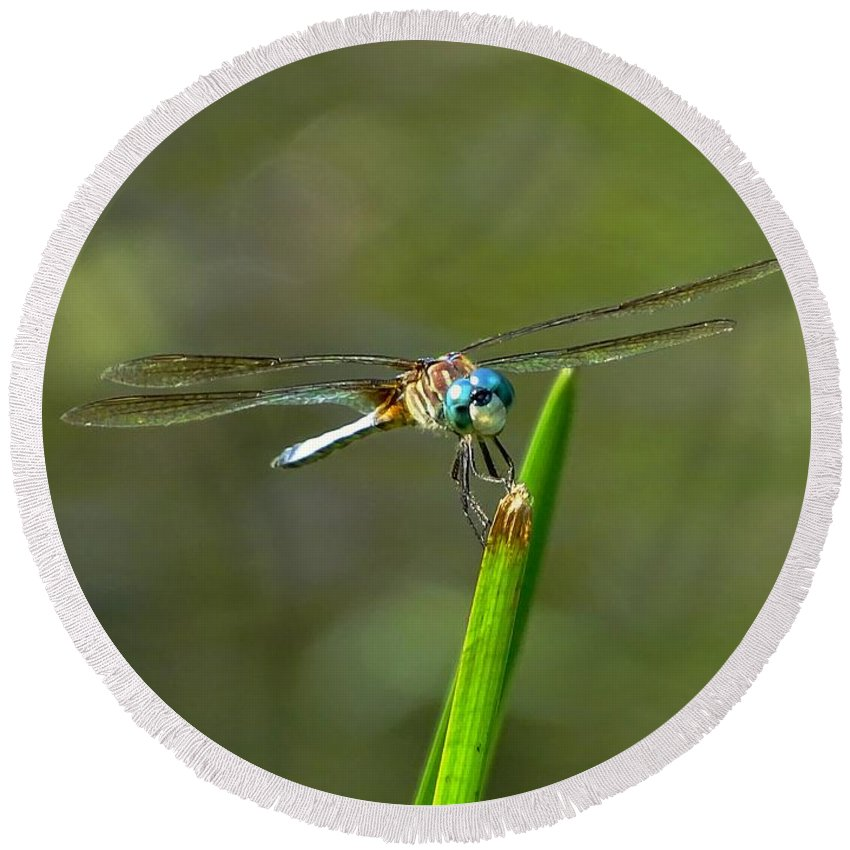 Dragonfly Round Beach Towel featuring the photograph Smiling Dragonfly by Lilia D