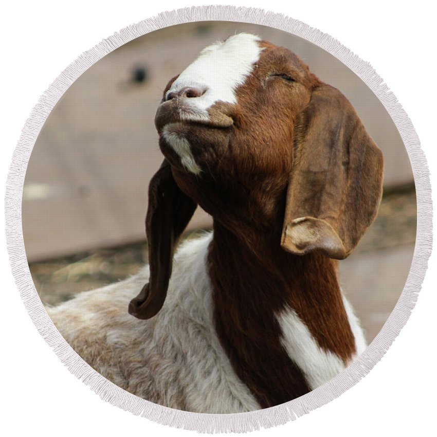 Happy Goat Round Beach Towel featuring the photograph Smiling Goat by Kate Verna Photography