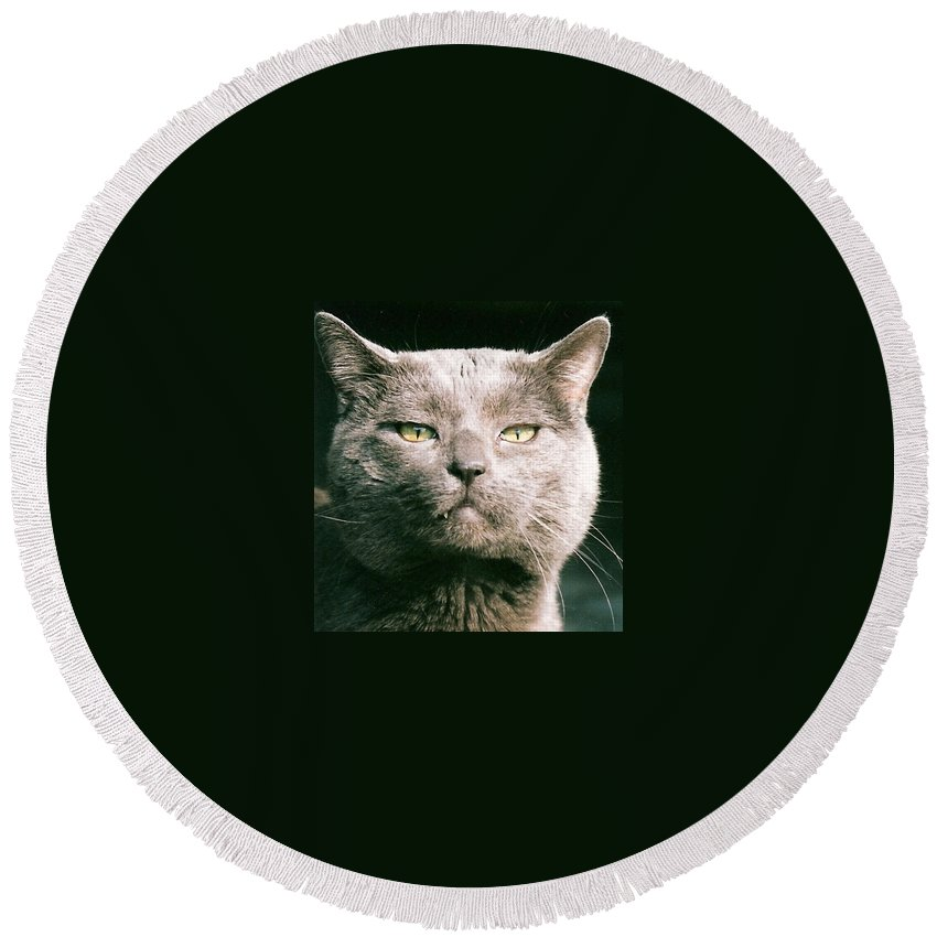 Cat Round Beach Towel featuring the greeting card Smokey by Lauri Novak