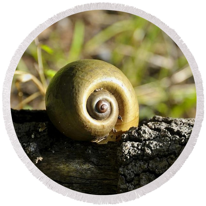 Snail Round Beach Towel featuring the photograph Snail by David Lee Thompson