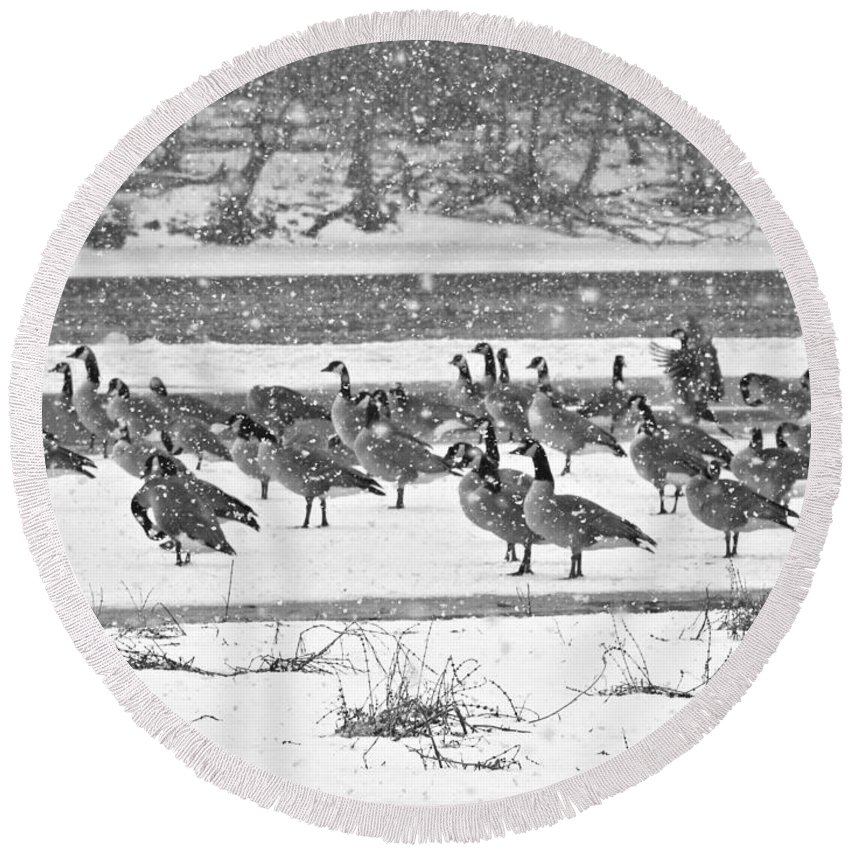 Snow And Geese On The River Ii Round Beach Towel featuring the photograph Snow And Geese On The River II by Kathy M Krause