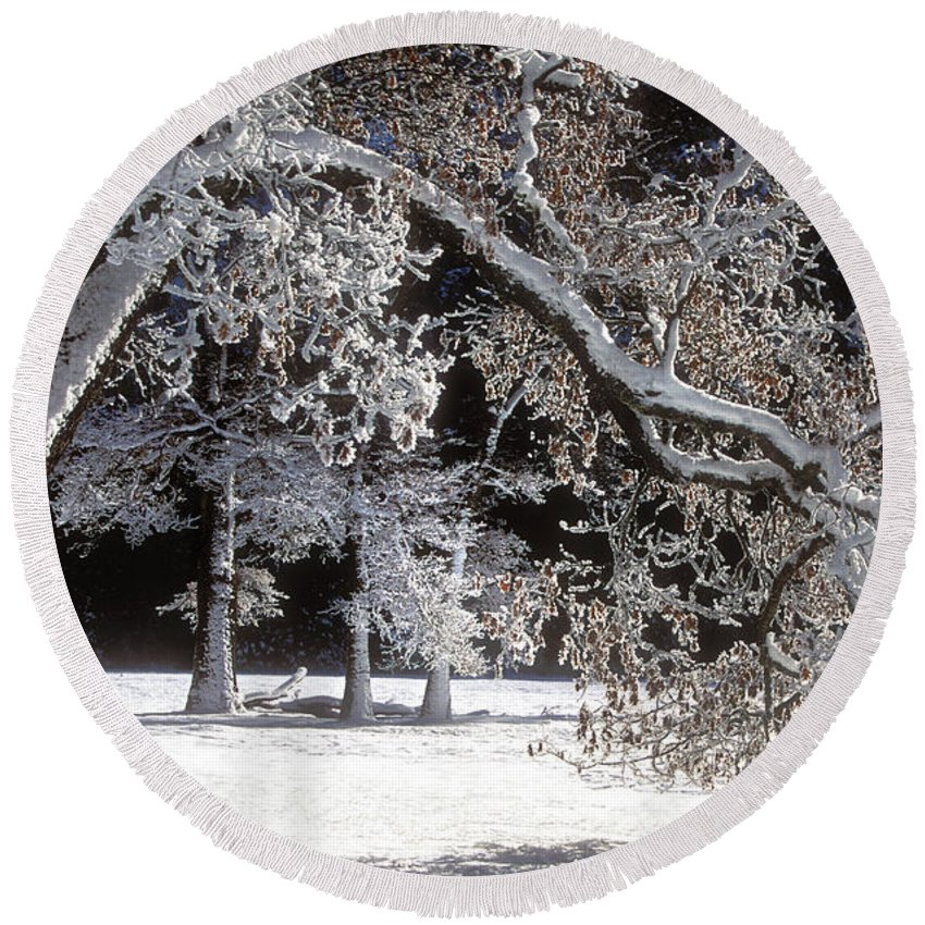 Black Oak Round Beach Towel featuring the photograph Snow Covered Black Oak Yosemite National Park by Dave Welling