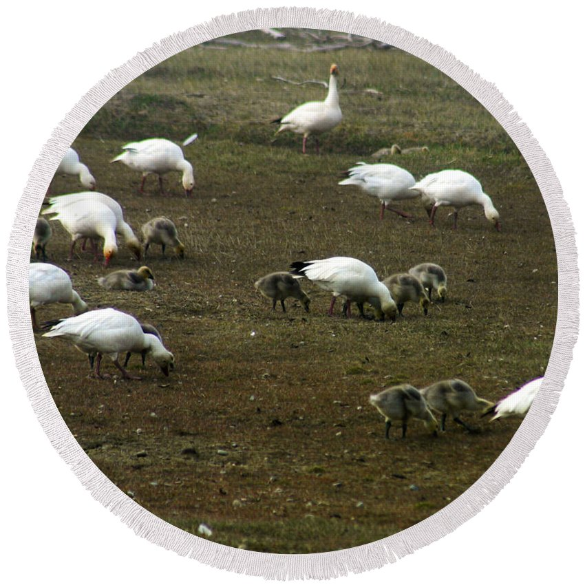 Snow Geese Round Beach Towel featuring the photograph Snow Geese by Anthony Jones