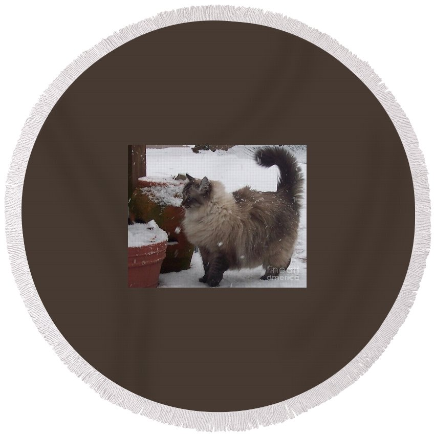 Cats Round Beach Towel featuring the photograph Snow Kitty by Debbi Granruth