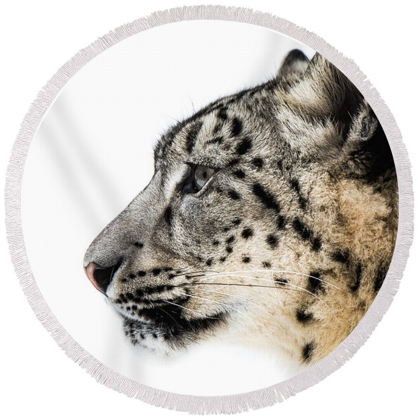 Animal Round Beach Towel featuring the photograph Snow Leopard Xv by Abeselom Zerit