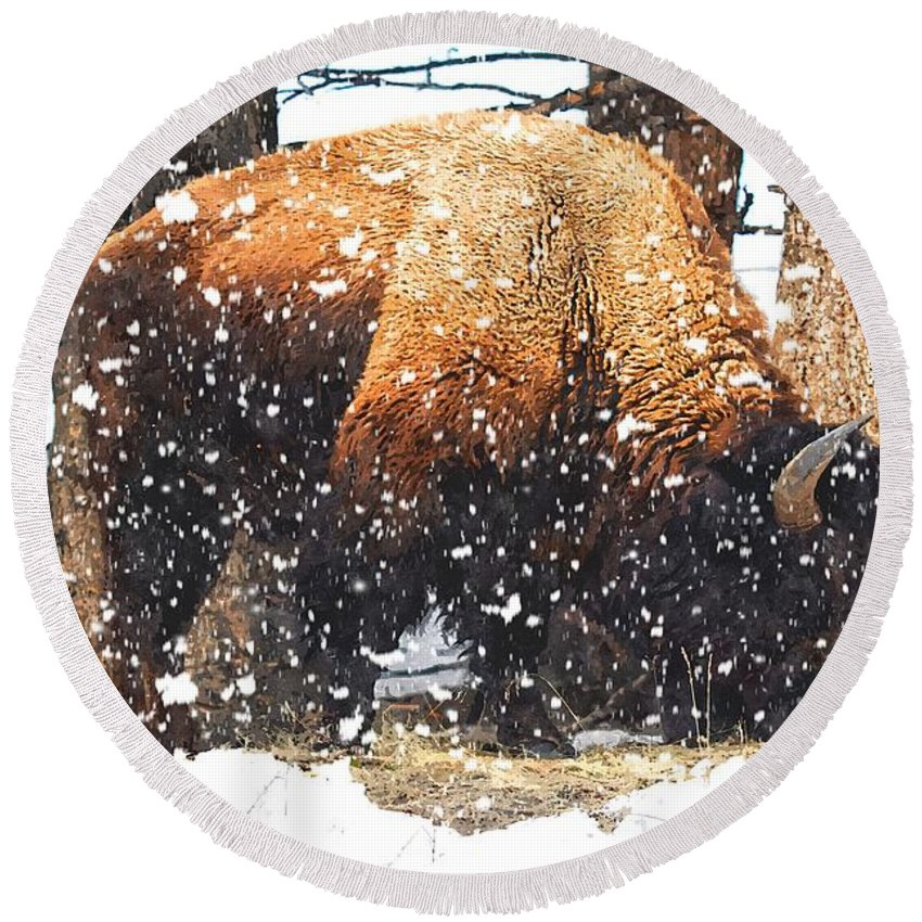 American Bison (bison Bison) Round Beach Towel featuring the photograph Snow Storm by Image Takers Photography LLC - Carol Haddon