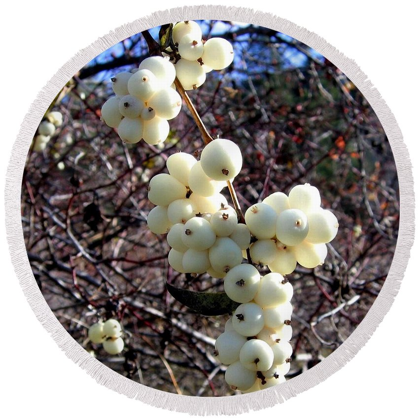 Autumn Round Beach Towel featuring the photograph Snowberries by Will Borden