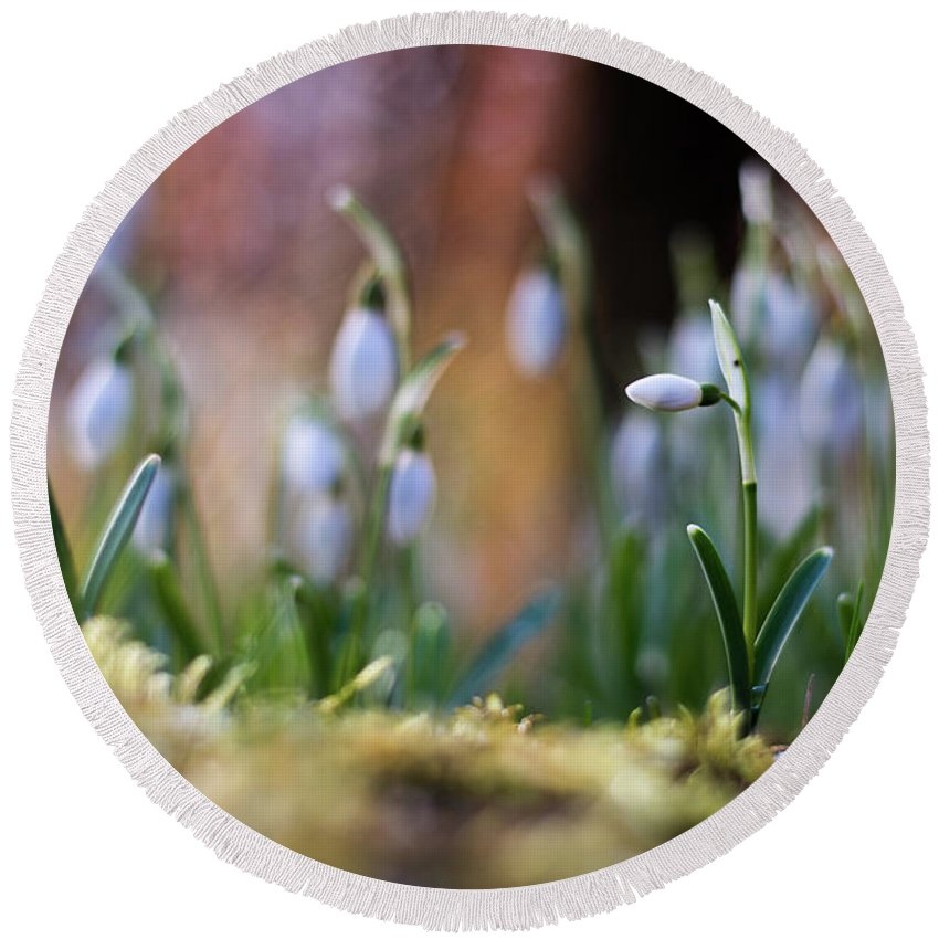 Nature Round Beach Towel featuring the photograph Snowdrops by Silviu Dascalu
