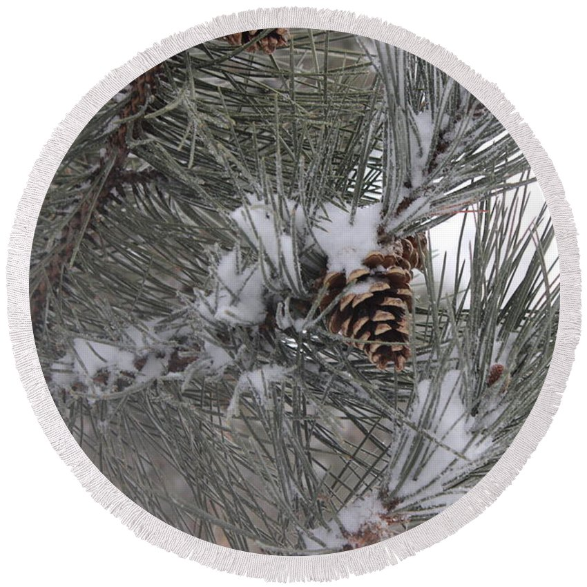 Pine Tree Round Beach Towel featuring the photograph Snowladen Pine. by Cliff Ball