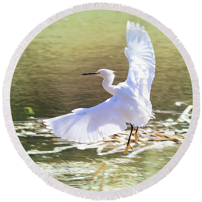 Egret Round Beach Towel featuring the photograph Snowy Egret Over Golden Pond by Carol Groenen