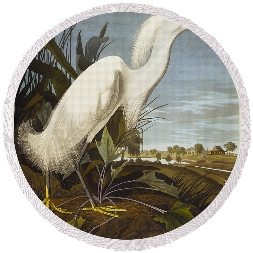 Snowy Heron Or White Egret / Snowy Egret (egretta Thula) Plate Ccxlii From 'the Birds Of America' (aquatint & Engraving With Hand-colouring) By John James Audubon (1785-1851) Round Beach Towel featuring the drawing Snowy Heron by John James Audubon