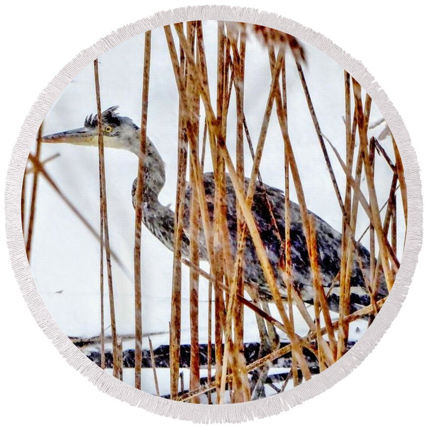 Heron Round Beach Towel featuring the photograph Snowy Heron? by Scott Hufford