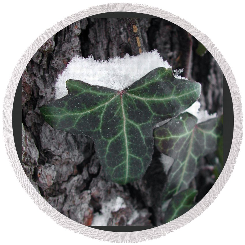 Photography Round Beach Towel featuring the photograph Snowy Ivy by Steven Scanlon