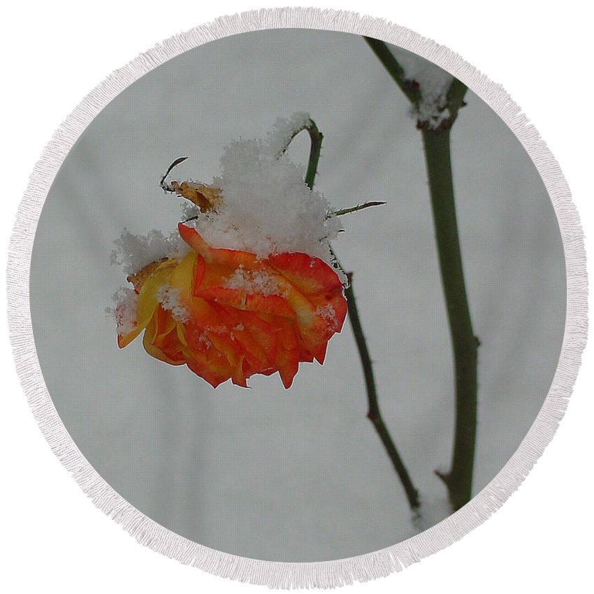 Flower Round Beach Towel featuring the photograph Snowy Orange Rose by Shirley Heyn
