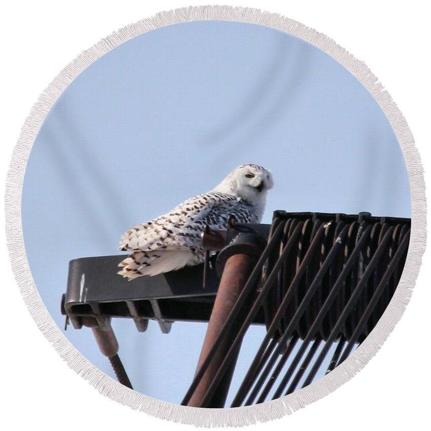 Snowy Owl Round Beach Towel featuring the photograph Snowy Owl 2959 by Joseph Marquis