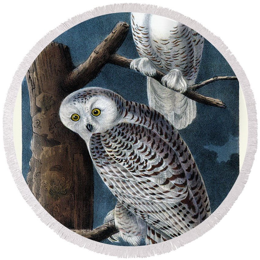 Snowy Owl Round Beach Towel featuring the painting Snowy Owl Audubon Birds Of America 1st Edition 1840 Royal Octavo Plate 28 by Orchard Arts