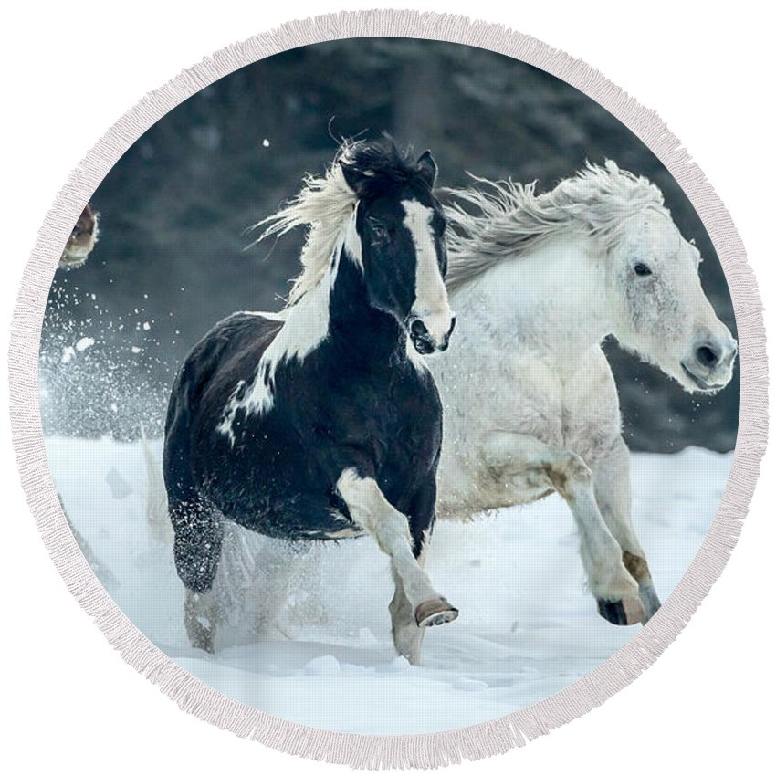 Horses Round Beach Towel featuring the photograph Snowy Run by Jack Bell