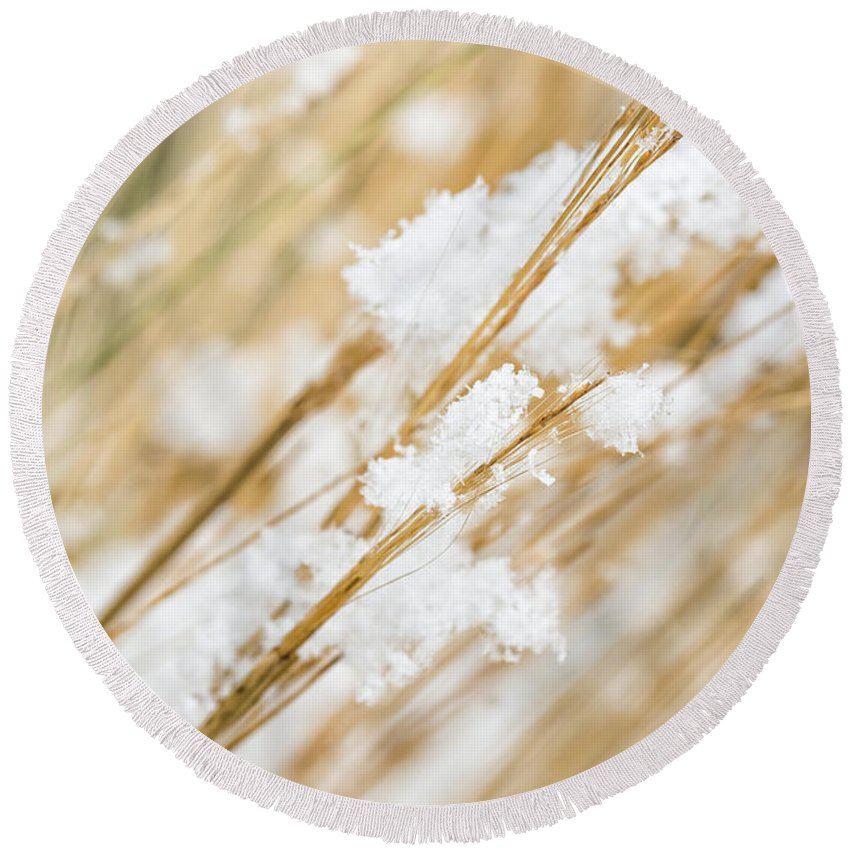 Snow Grass Weed Snowy Weed Snowy Plant Winter Detail Close Close Up Close-up Macro Snowflakes Nature White Background Frost Frosty Meadow Christmas Garden Cold Weather Season Flake Field Covered Space Rural Leaf White Beige Minimal Minimalist Minimalism Macrophotography Round Beach Towel featuring the photograph Snowy Weed by Delphimages Photo Creations