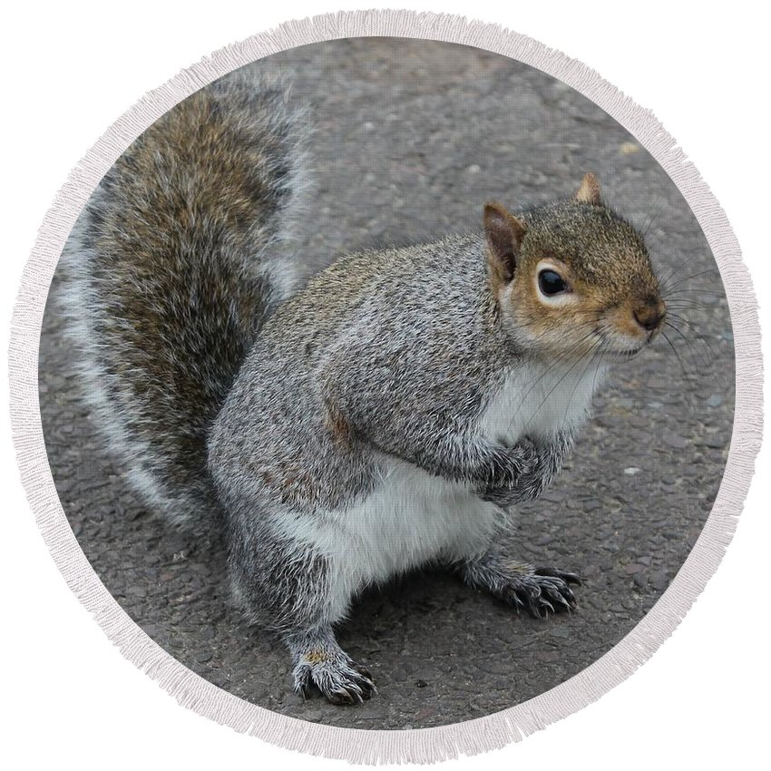 Squirrel Round Beach Towel featuring the photograph So.... Got Nuts? by Vicki Spindler