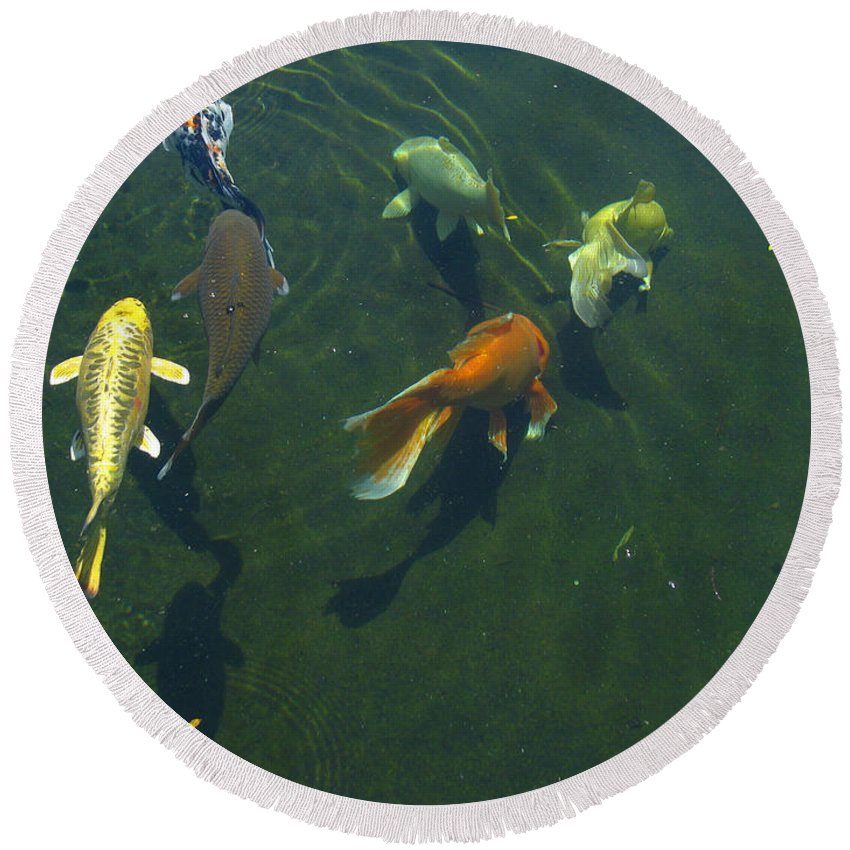 Patzer Round Beach Towel featuring the photograph So Koi by Greg Patzer