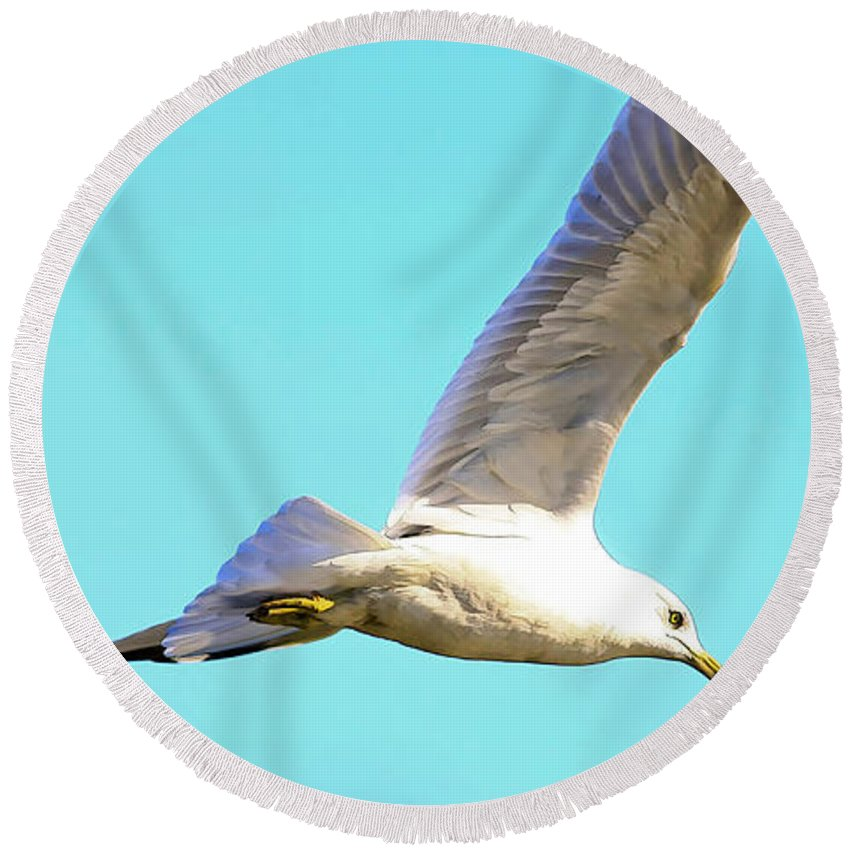 Bird Round Beach Towel featuring the photograph Soaring In A Blue Sky by Deborah Benoit