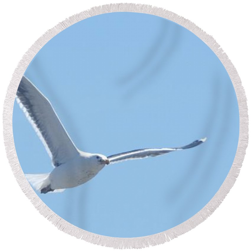 Seagull Round Beach Towel featuring the photograph Soaring by Steven Natanson