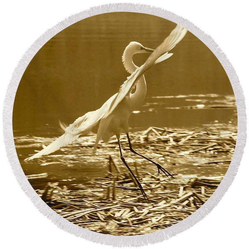 Bird Round Beach Towel featuring the photograph Soft Landing by Carol Groenen