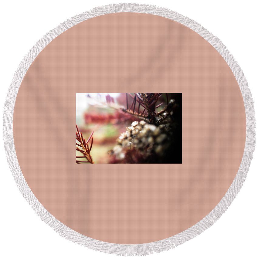 Nature Round Beach Towel featuring the photograph Soft by Lyra Bartell