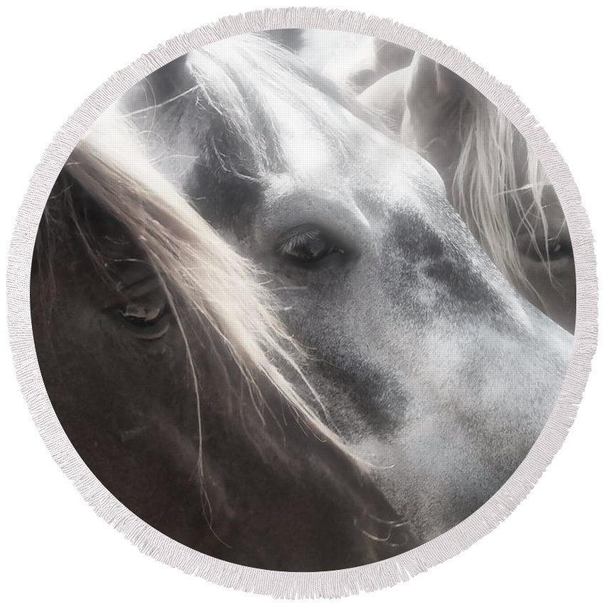 Horse Round Beach Towel featuring the photograph Softly Settling by Phil Cappiali Jr