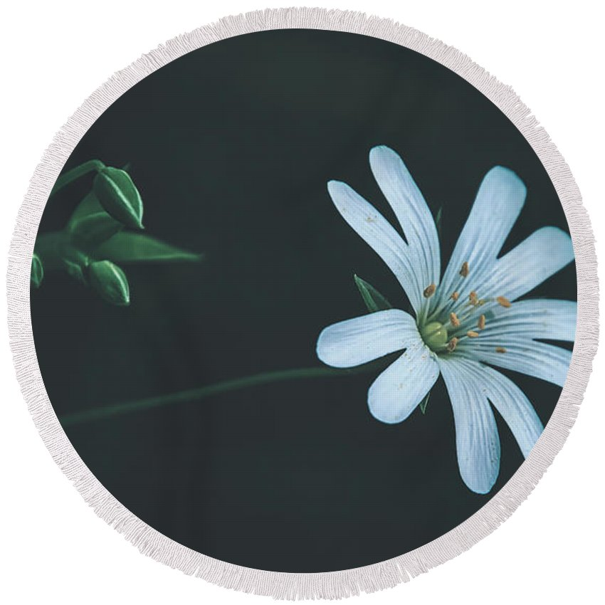 Flower Round Beach Towel featuring the photograph Solitary Beauty by Pixabay